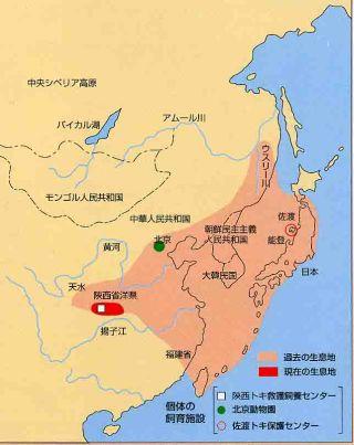 中国のトキ地図
