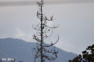 放鳥トキ11月写真その3