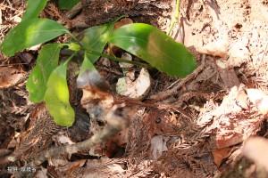 ペアの巣の下で回収した卵殻