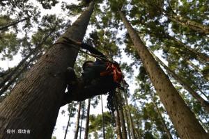 (#74足環なしペア)木登り開始