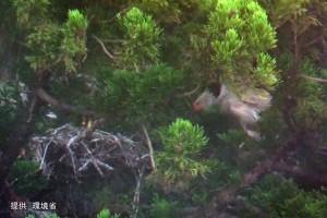 巣立った幼鳥(#08#25ペア)