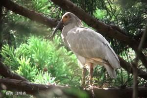 巣立ちした幼鳥1羽A16