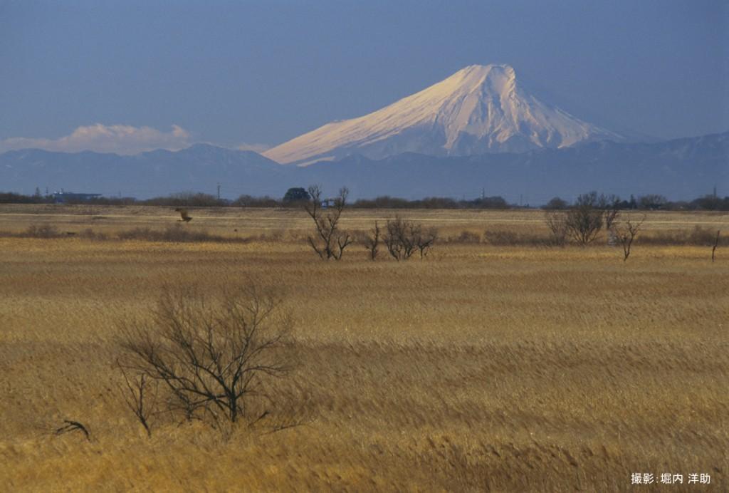 アシ原と富士山