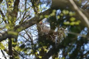 巣を整える#204